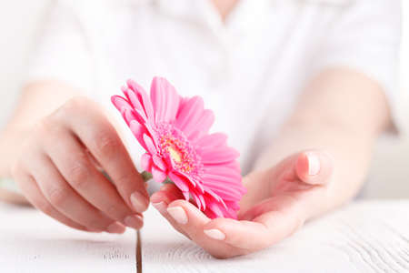 Woman hygiene conception. Pink flower gerbera in female hands Stok Fotoğraf - 102939249