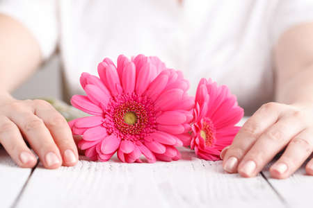 Pink flower gerbera in female hands, close up view female care concept Stock Photo