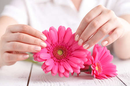 Spa and body care concept, pink gerbera in female hand Stock Photo