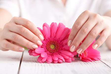 Female hold pink flower gerbera in hand on white background