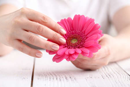 Woman hygiene conception pink flower gerbera in female hands stock stock photo woman hygiene conception pink flower gerbera in female hands mightylinksfo