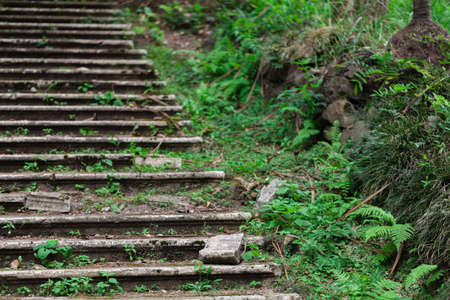 Old abandoned stairway in the park will be going green alive,Highly humid in tropical climate