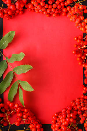 Seasonal fall concept, berries in frame on wooden table