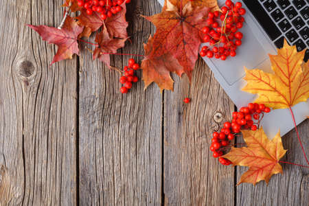Workspace with yellow and red maple leaves. Desktop with laptop, fallen leaves on grey wooden background