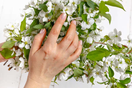 Beautiful girl hands with a branch of a blossoming apple tree 版權商用圖片
