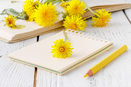 Dandelion flowers collection with a notebook