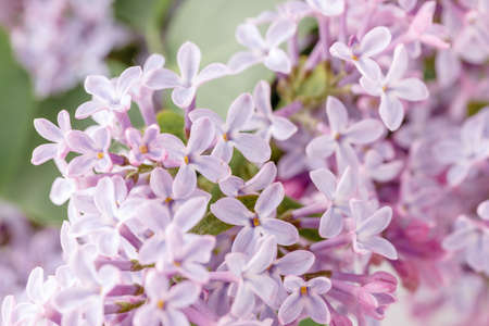 Fresh lilac on wooden table< romantic scene