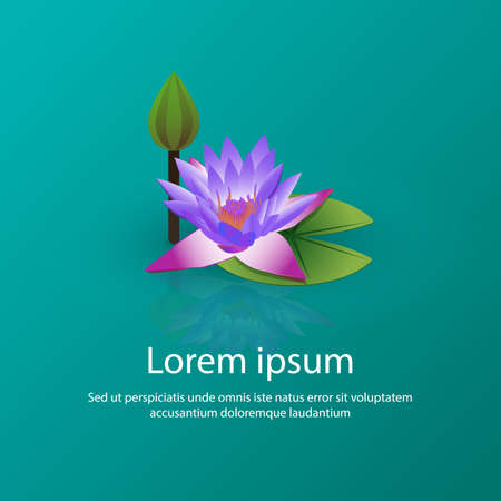Blooming lily lotus on the water vector illustration. Lotus flower with leaf and closed flower with text. Concept for postcard, invitation, cosmetics, yoga, health care and ayurveda. Ilustrace