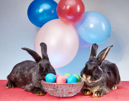 near: Two black bunny near Easter eggs Stock Photo