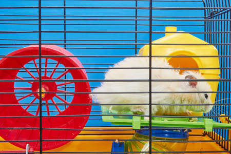 Little hamster in front of his house in a cage Stock Photo
