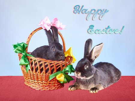 Rabbit lies near a basket with a rabbit