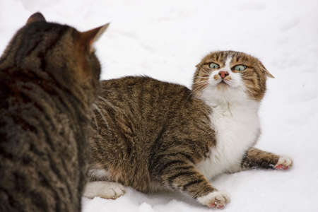 favourite: Cat a pet the general favourite Stock Photo