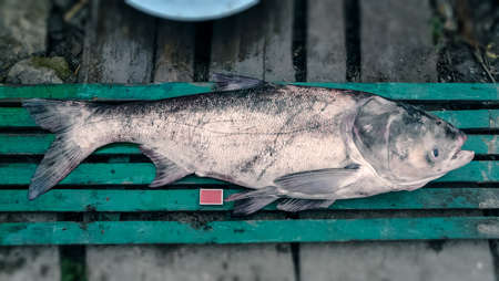real trophy: Huge fish that were caught and put near some matches Stock Photo