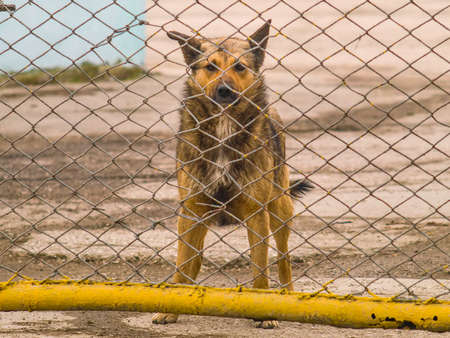 The lonely dog behind a fence looking at the camera