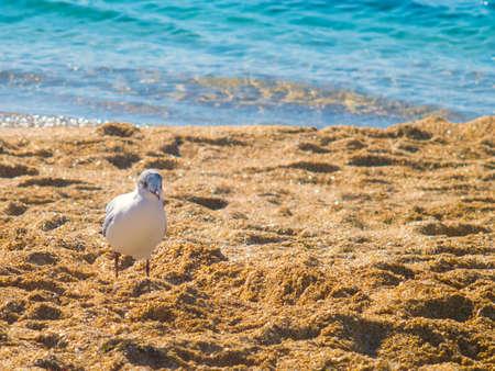 The cute seagull on the beach near the sea Stock Photo
