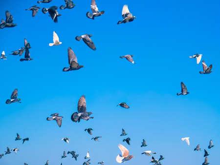 Die Tauben fliegen gegen den Himmel