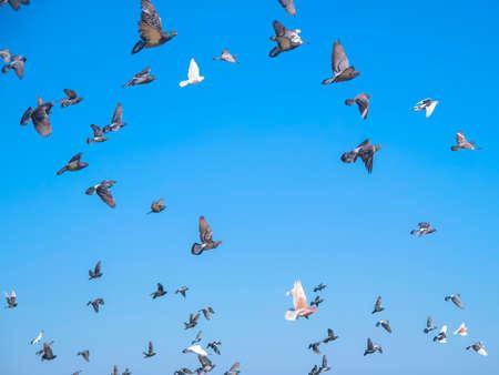 Viele der Tauben fliegen gegen den blauen Himmel