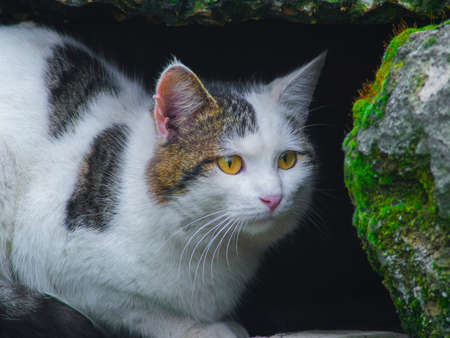 The cat sitting among stones close up