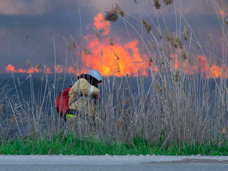fireman: The firefighter extinguishes fire in the field