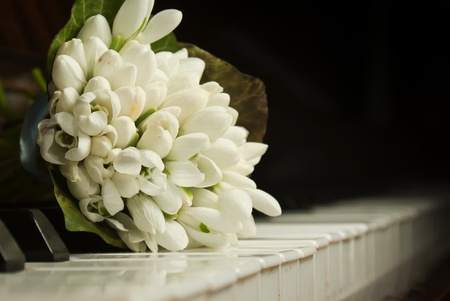 Bouquet of snowdrops laying on the piano keyboard photo