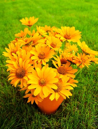 susan: Bouquet of Black Eyed Susan yellow flowers on the grass