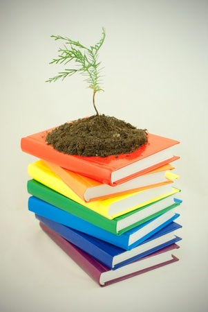 Tree seedling on the stack of colorful books Stock Photo