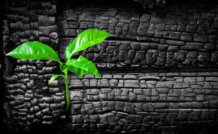 Sprout on charred ruins concept Stock Photo - 5814571