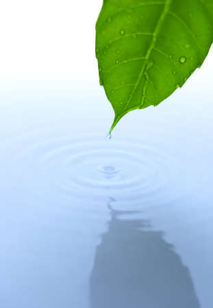 Water drop fall from green leaf with ripple Stock Photo - 5813552