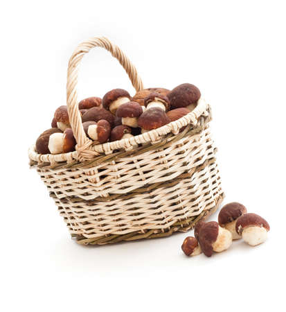 Basket full of cepe mushrooms and small pile on white background photo