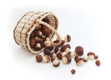 Basket full of cepe mushrooms and small pile photo