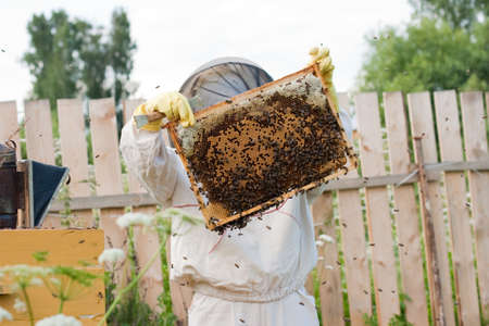 Bee keeper at work Stock Photo - 5814511