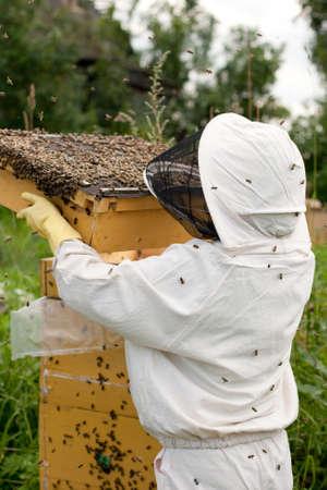 avispa: Poseedor de la abeja en el trabajo  Foto de archivo