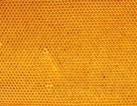 fresh honey in comb Stock Photo - 5814576