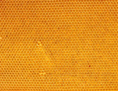 fresh honey in comb Stock Photo - 5814576