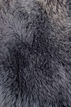 Polar fox gray fur texture photo