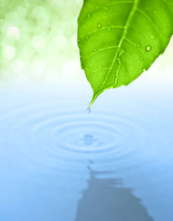 Water drop fall from green leaf with ripple photo