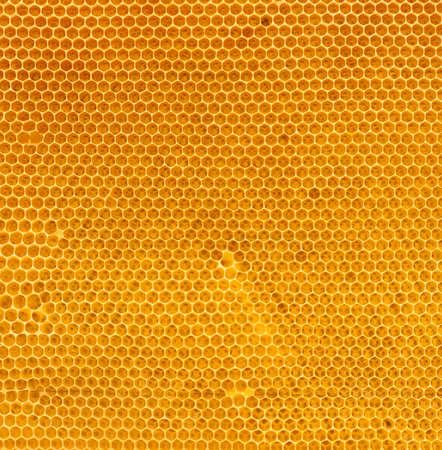fresh honey in comb texture Stock Photo