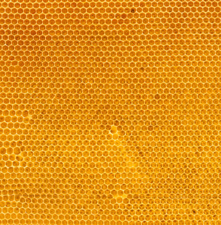 comb: fresh honey in comb texture Stock Photo