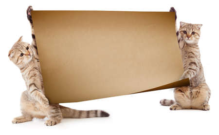 two animals: Two kittens with placard or banner for text