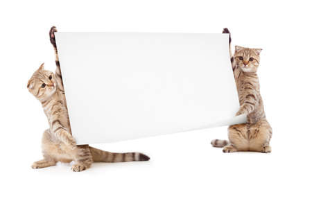 two kittens isolated with placard or banner Stock Photo - 9470121