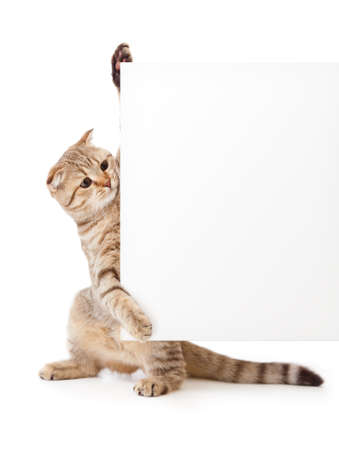 kitten isolated with placard or banner for your text Stock Photo