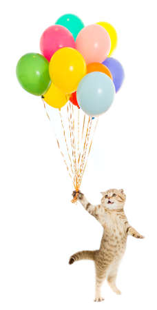 walking kitten or cat  tabby with colourful balloons isolated photo