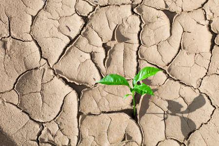 barren: Green sprout on barren soil concept