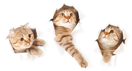 set of one cat in paper side torn hole isolated Stock Photo - 9892555