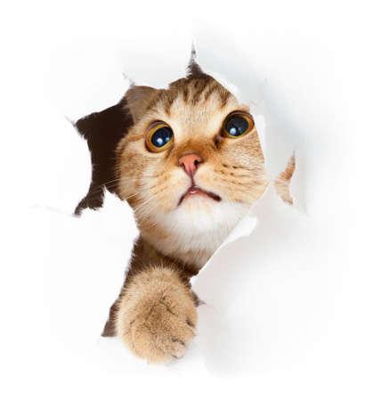 is playful: gato en el agujero de papel rasgado lado aislados Foto de archivo