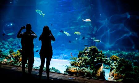 personas tomando agua: Fondo real submarina con peces shoal Foto de archivo