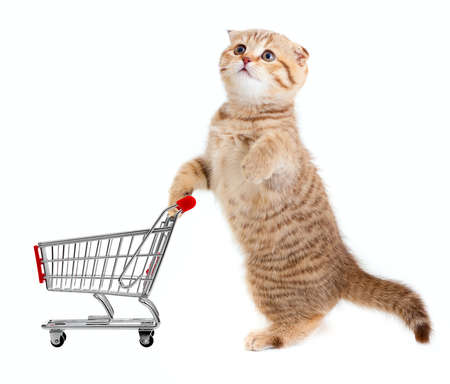 pet store: cat with shopping cart isolated on white