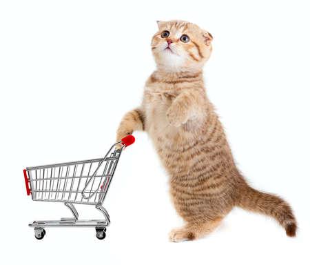 tienda de animales: gato con el carrito de la compra aislados en blanco