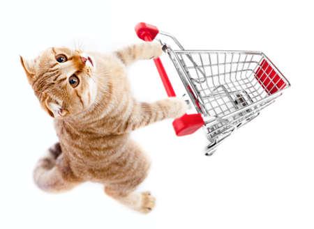 白で隔離されるショッピング カート上面と猫 写真素材
