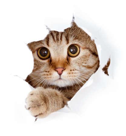 kat te zoeken in papieren kant geïsoleerde gescheurd gat Stockfoto